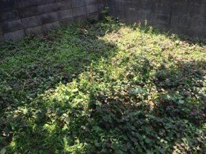 熊本草刈り、熊本庭の草刈り、八代市草刈り、熊本雑草